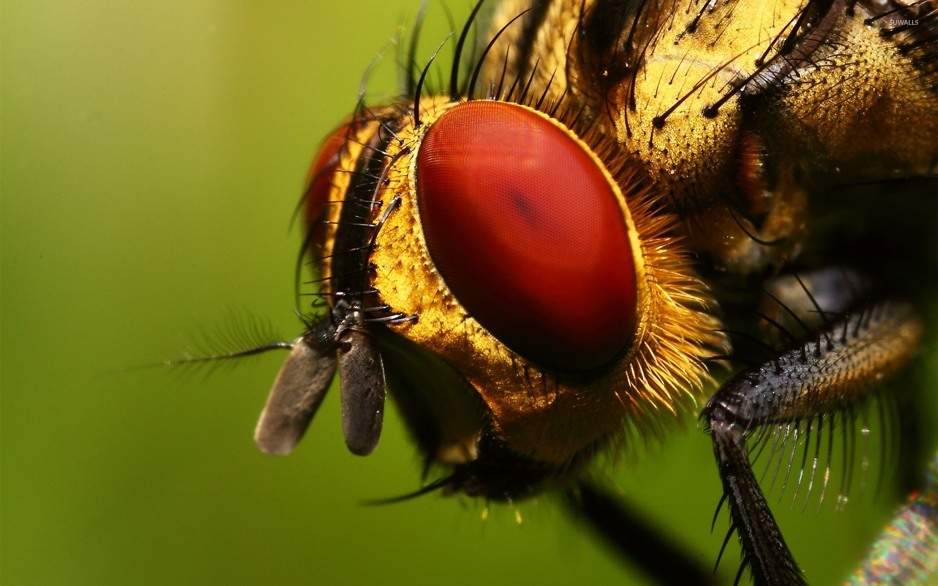 Insect wallpaper - Animal wallpapers - #18389