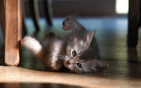 Kitten [9] wallpaper 1920x1200 jpg
