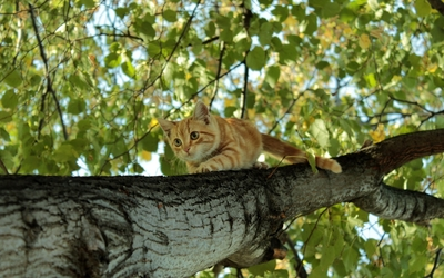 Kitten climbing down the tree wallpaper