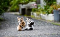 Kitten couple wallpaper 1920x1200 jpg