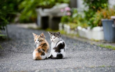 Kitten couple wallpaper