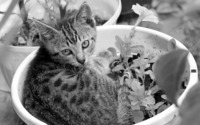Kitten in a flowerpot wallpaper 2880x1800 jpg