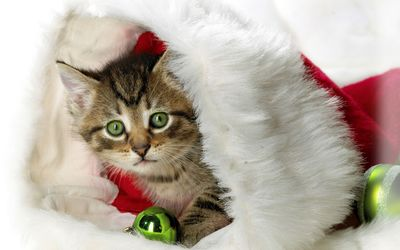 Kitten in Santa's hat by the green bauble wallpaper