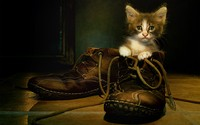 Kitten in the shoe wallpaper 1920x1200 jpg