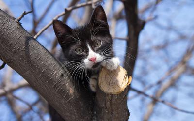 Kitten in tree wallpaper