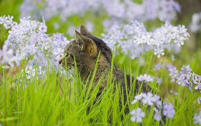 Kitten looking at the flowers in the grass Wallpaper