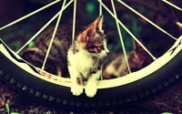 Kitten on a bicycle wheel wallpaper 1920x1080 jpg