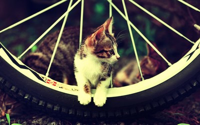 Kitten on a bicycle wheel wallpaper