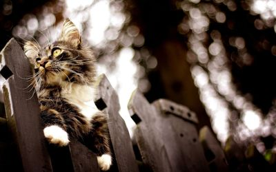 Kitten on a wooden fence wallpaper