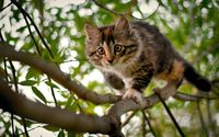 Kitten on the tree wallpaper 1920x1200 jpg