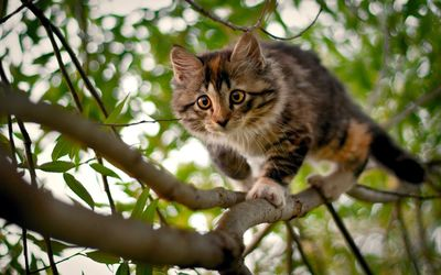Kitten on the tree wallpaper