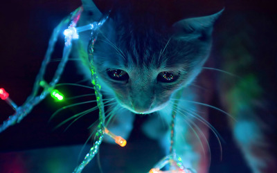 Kitten playing with the Christmas lights wallpaper