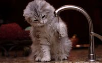 Kitten playing witht the tap wallpaper 2560x1600 jpg