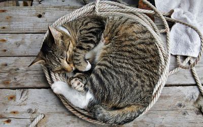 Kitten sleeping in the basket wallpaper
