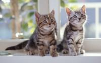 Kittens [2] wallpaper 1920x1200 jpg