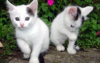 Kittens [5] wallpaper