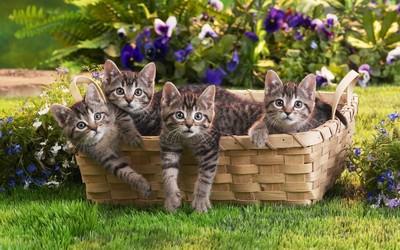 Kittens [3] wallpaper