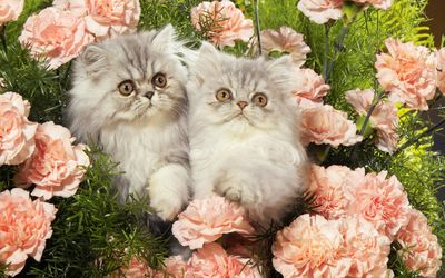 Kittens between the pink flowers wallpaper