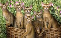 Kittens in the basket wallpaper 1920x1080 jpg