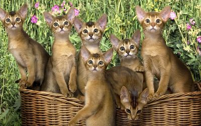 Kittens in the basket wallpaper