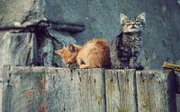 Kittens on the fence wallpaper 1920x1080 jpg