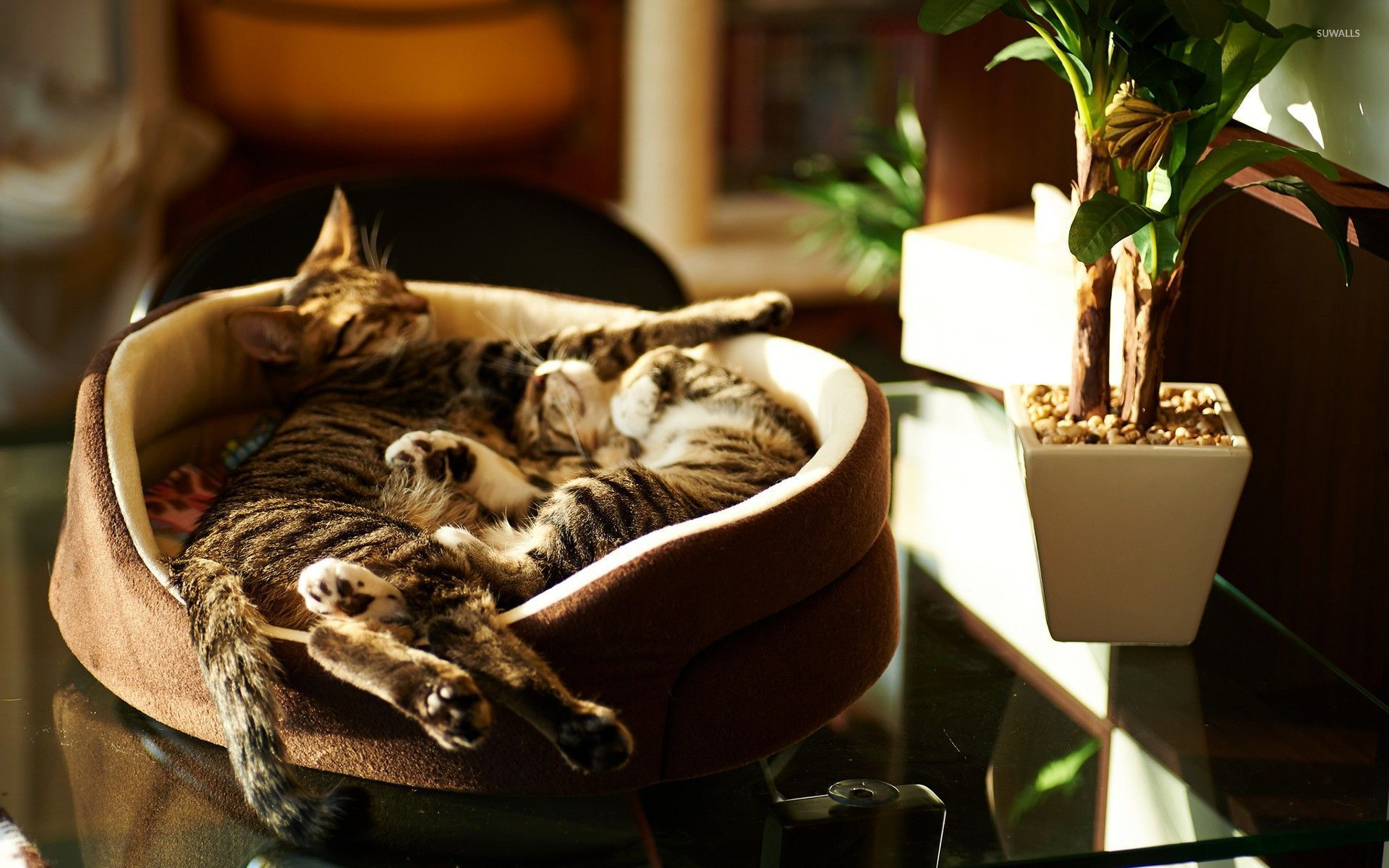Cats Kitten Cat Cats Sleeping Pictures With Funny Captions HD
