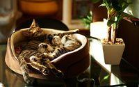 Kittens sleeping in a basket wallpaper 1920x1200 jpg