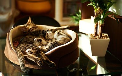 Kittens sleeping in a basket wallpaper