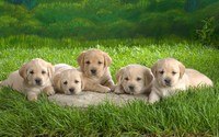 Labrador Puppies wallpaper 1920x1200 jpg