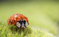 Ladybug [10] wallpaper 1920x1080 jpg