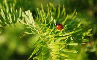Ladybug [16] wallpaper 2560x1600 jpg