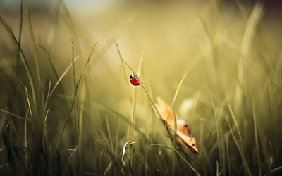 Ladybug [12] wallpaper