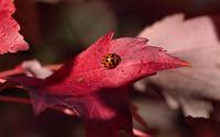 Ladybug [14] wallpaper 2560x1600 jpg