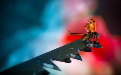 Ladybug [15] wallpaper