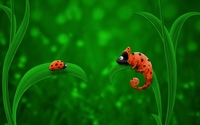 Ladybug and Chameleon wallpaper 1920x1200 jpg