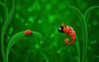 Ladybug and Chameleon wallpaper 1920x1200 jpg