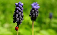 Ladybug on purple flower wallpaper 1920x1200 jpg