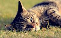 Lazy cat [4] wallpaper 2880x1800 jpg
