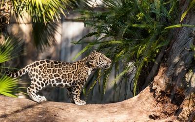 Leopard cub [2] wallpaper