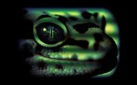 Leopard gecko wallpaper 1920x1200 jpg