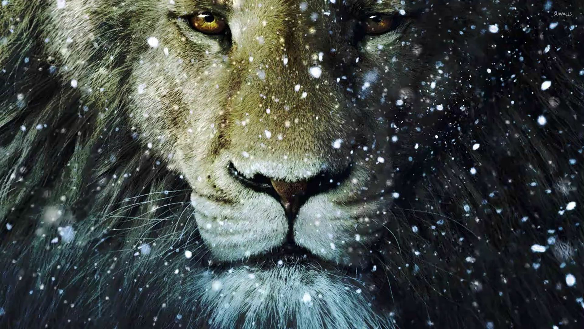 lion in the snow wallpaper - animal wallpapers - #29278