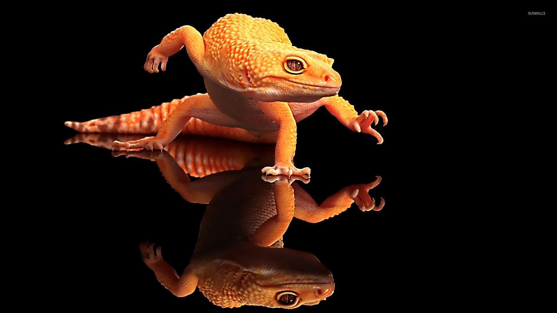 22 reptile hd wallpapers - photo #39