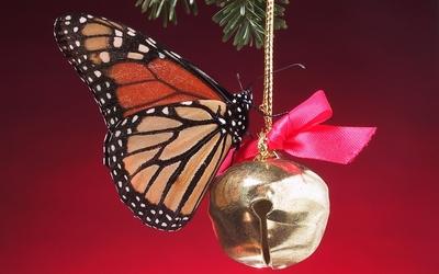 Monarch butterfly [6] wallpaper