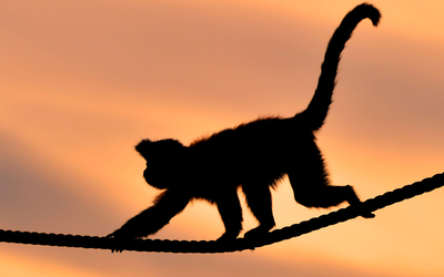 Monkey on a rope at sunset wallpaper