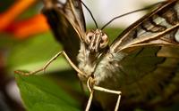 Moth wallpaper 1920x1200 jpg