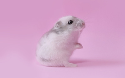 Mouse [3] wallpaper