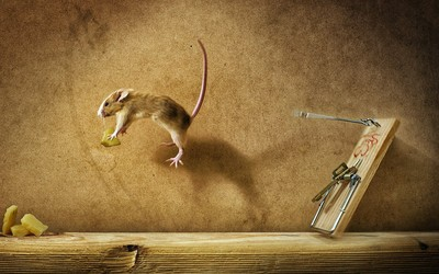 Mouse jumping for cheese wallpaper