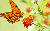 Orange butterfly wallpaper 2560x1440 jpg