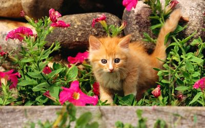 Orange kitten between the flowers wallpaper