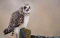 Owl [10] wallpaper 2560x1600 jpg